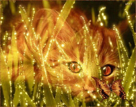 Анимация Рыжий котенок наблюдает за машущей крыльями бабочкой через листья травы (© Solnushko), добавлено: 20.04.2015 16:35