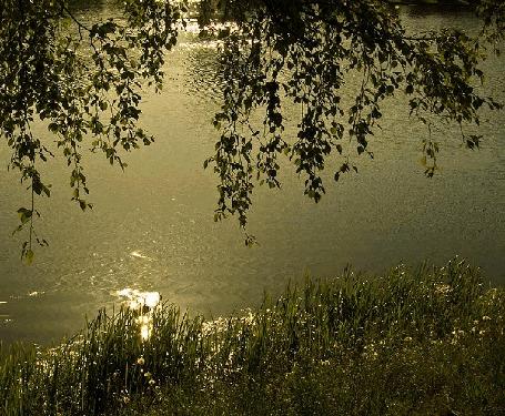 Анимация Над берегом реки наклонилась ветка дерева (© Svetlana), добавлено: 20.04.2015 18:59