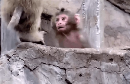 Анимация Мама - обезьянка учит своего ребенка жизни (© Anatol), добавлено: 21.04.2015 00:31