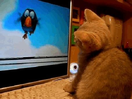 Анимация Кошки тоже любят смотреть мультфильмы (© Anatol), добавлено: 21.04.2015 00:52