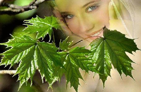 Анимация Красивая девушка улыбается сквозь зеленые листья клена (© Akela), добавлено: 21.04.2015 11:10
