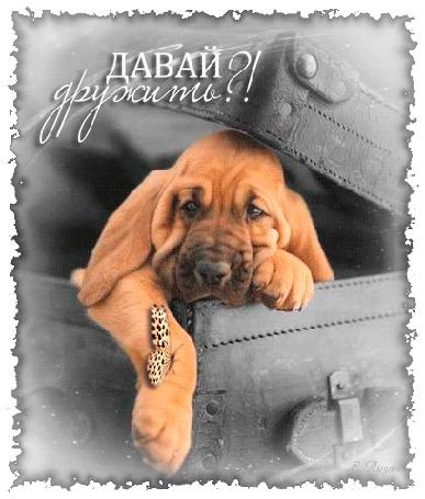 Анимация Собака сидит в чемодане и моргает глазами, на правой лапе у нее машет крыльями бабочка (Давай дружить!) (© Solnushko), добавлено: 21.04.2015 16:41