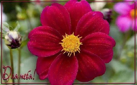 Анимация Большой блестящий красный цветок в окружении бутонов и цветов (Для тебя!)