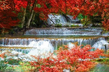 Анимация В лесу каскадом течет водопад, вокруг деревья с красными листьями. В правом нижнем углу видны улетающие птицы (© Solnushko), добавлено: 21.04.2015 16:45