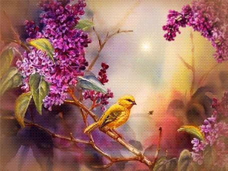 Анимация На ветке распустившейся сирени сидит птичка с желтым оперением. Она машет крылышками и поворачивает голову, рядом с ней порхает мотылек. На заднем плане ярко светит Солнце