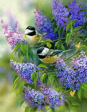 Анимация Две синички сидят на ветках распустившейся сирени, одна из них поворачивает голову, обе машут крылышками. В правом нижнем углу картинки порхает желтая бабочка (© Solnushko), добавлено: 22.04.2015 15:11