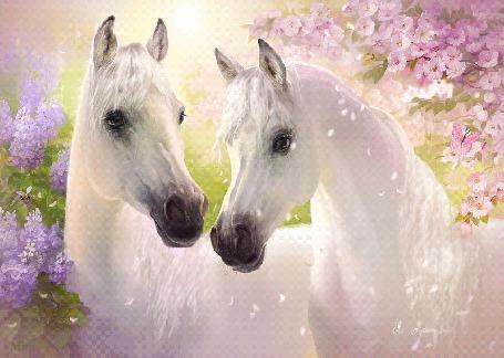 Анимация Два белоснежных арабских скакуна в окружении распустившейся сирени и дерева с розовыми цветами. Справа на розовых цветках машет крыльями бабочка, слева на цветах сирени порхает пчела. С дерева слетают розовые лепестки