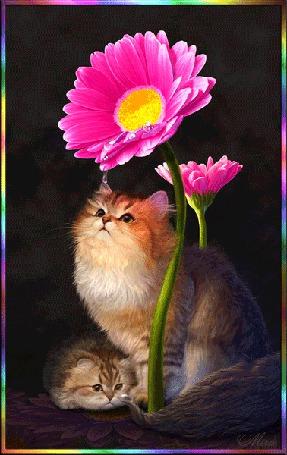 Анимация На котенка, смотрящего вверх, с лепестков ярко-розового гербера стекают капли росы. Рядом лежит еще один котенок