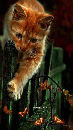 Анимация Рыжий котенок, перегнувшись через забор, пытается поймать бабочек, порхающих внизу