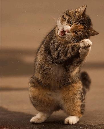 Анимация Кот что-то поймал в лапы (© Akela), добавлено: 22.04.2015 16:56