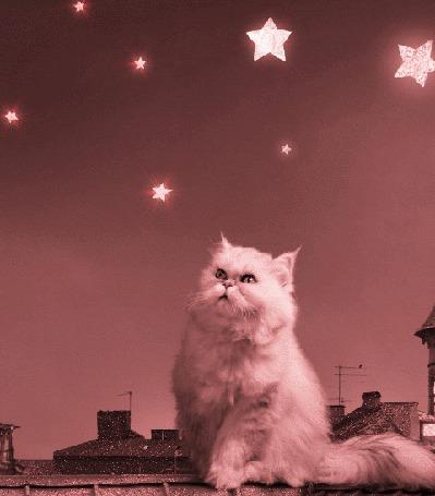 Анимация Белый пушистый кот сидит на крыше дома и смотрит вверх на звездное небо (© Akela), добавлено: 22.04.2015 18:52