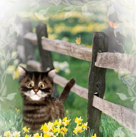 Анимация Забавный котенок облизываясь, пытается поймать кружащих над ним бабочек (© Akela), добавлено: 22.04.2015 21:11