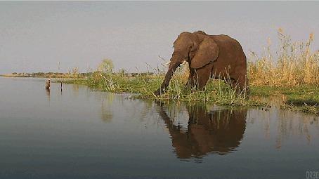 Анимация Слон пьет из озера, by Orbo (© Seona), добавлено: 23.04.2015 11:33