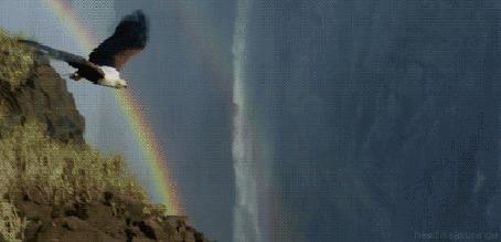 Анимация Орел парит высоко в горах, в небе радуга