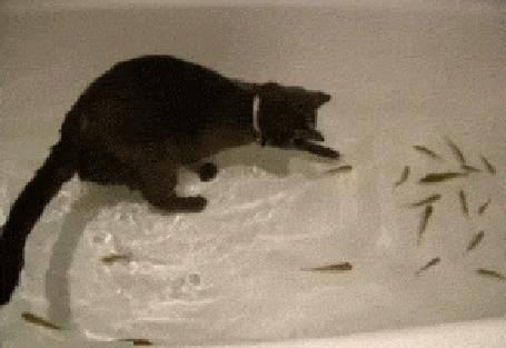 Гифки кот с рыбой