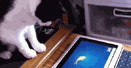 Анимация Кот ловит рыбку, плавающую на экране планшетника (© Anatol), добавлено: 24.04.2015 00:27