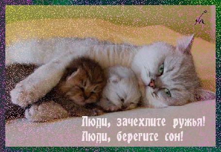 Анимация Кошка обнимает своих котят, охраняя их сон (Люди, зачехлите ружья! Люди, берегите сон!) (© Akela), добавлено: 26.04.2015 00:00