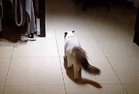 Анимация Кот испугался человека, который его снимает (© Anatol), добавлено: 26.04.2015 01:26