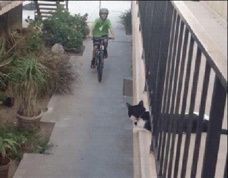 Анимация Мальчик на велосипеде приветствует котенка (© zmeiy), добавлено: 28.04.2015 08:40