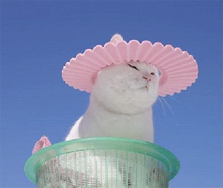 Анимация Кот в корзине с розовым кругом на голове