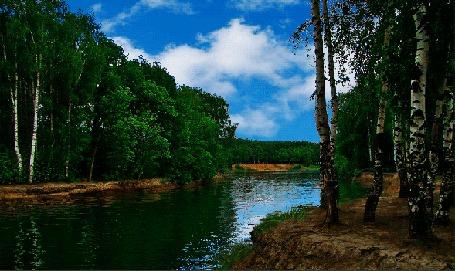 Анимация Березовый лес по берегам реки