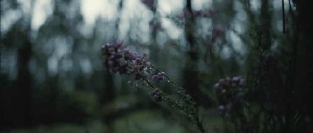 Анимация Цветы колышутся от ветра