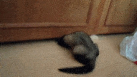 Анимация Хорек пытается залезть под шкаф и в конце концов ему это удается (© Anatol), добавлено: 02.05.2015 00:46