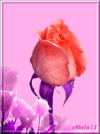 Анимация Распускающая красная роза и тюльпаны, Akela73 (© Akela), добавлено: 02.05.2015 15:57
