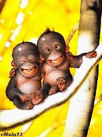 Анимация Две смеющиеся обезьяны сидят обнявшись на ветке дерева, Akela73 (© Akela), добавлено: 02.05.2015 16:14