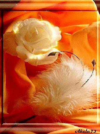 Анимация Белая роза и белое пуховое перо, Akela73 (© Akela), добавлено: 02.05.2015 16:15