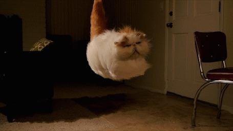 Анимация Мощный поток воздуха поднимает кота вверх и разбрасывает мебель (© Anatol), добавлено: 02.05.2015 17:55