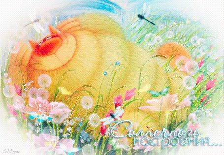 Анимация Довольный желтый кот лежит в цветах, над ним порхают стрекозы и бабочки, надпись Солнечного настроения (© Natalika), добавлено: 02.05.2015 20:38