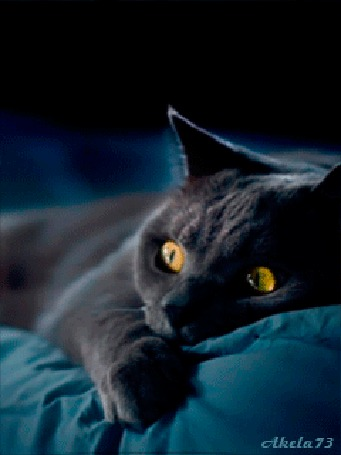 Анимация Пепельный кот мечтает о любимой кошке, Akela 73 (© Akela), добавлено: 02.05.2015 23:01