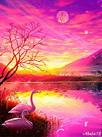 Анимация Белые лебеди стоят у воды, Akela 73 (© Akela), добавлено: 03.05.2015 02:58