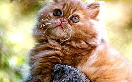 Анимация Лохматый кот сидит на камне и смотрит вверх