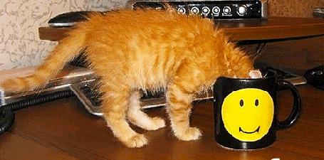Анимация Рыжий кот пьет с черной чашки, на которой нарисован, подмигивает и улыбается желтый смайлик (© Akela), добавлено: 03.05.2015 04:16