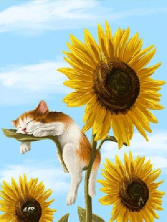 Анимация Котенок сладко спит на листе подсолнуха, художница Veronica Minozzi (© chucha), добавлено: 04.05.2015 00:19