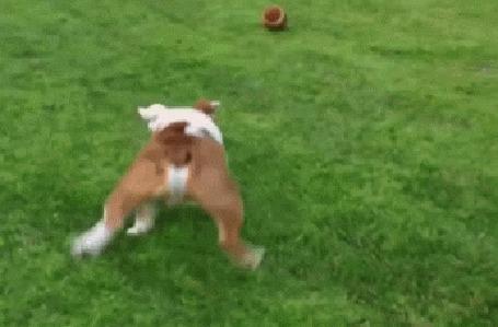 Анимация Собака гоняется за мячом (© Anatol), добавлено: 05.05.2015 19:29