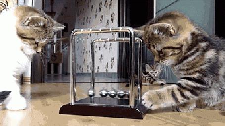 Анимация Коты развлекаются с маятником (© Anatol), добавлено: 05.05.2015 23:29