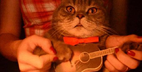 Анимация Девушка держит в руках кота, который играет на маленькой гитаре (© Seona), добавлено: 07.05.2015 13:50