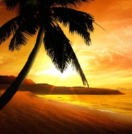 Анимация Пальма на берегу экзотического острова (© Akela), добавлено: 08.05.2015 14:56