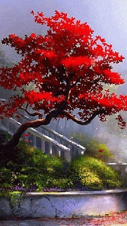 Анимация В осеннем парке с клена опадают красные листья (© царица Томара), добавлено: 08.05.2015 15:19