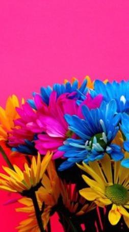 Анимация Желтые, голубые и розовые цветы на розовом фоне