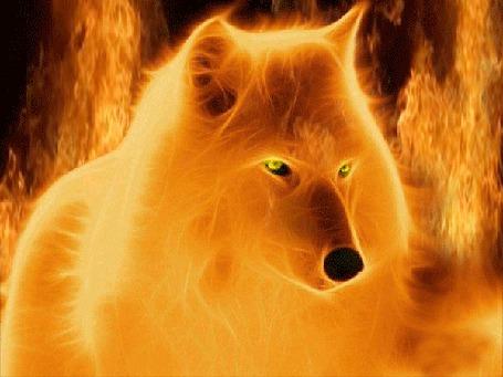 Анимация Фрактальное изображение желтого волка в обрамлении пламени (© Bezchyfstv), добавлено: 09.05.2015 09:17