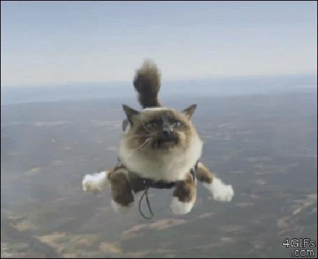 Анимация Котик в свободном падении смотрит на кольцо паршюта (© 16061984), добавлено: 10.05.2015 00:51