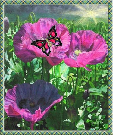 Анимация Бабочка на лиловом маке под лучиком солнца, автор W. K (© Natalika), добавлено: 10.05.2015 20:38