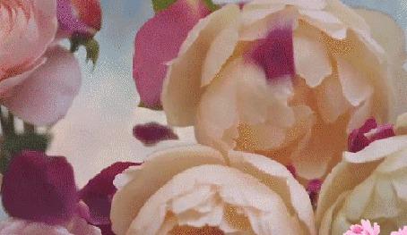 Анимация Улыбающаяся девушка закрывает и открывает свои глаза ладошками, в это время розы и лепестки то появляются, то пропадают