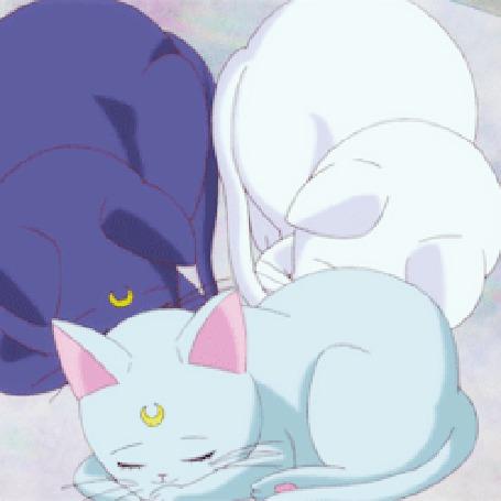 Анимация Спящие разного цвета котята (© zmeiy), добавлено: 13.05.2015 21:02