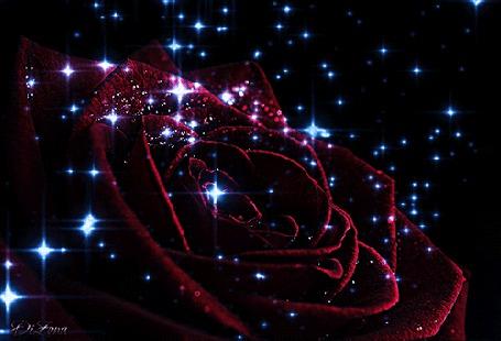 Анимация Бордовая роза в блестках