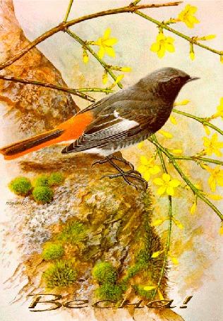 Анимация Птичка на дереве поет о приходе весны на фоне желтых цветочков, Весна, Надюшка (© Natalika), добавлено: 14.05.2015 12:16